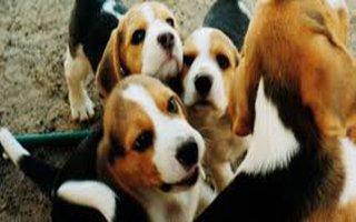 Dükkanlarda kedi ve köpek satışı yasaklanıyor