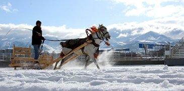 Erzurum'da atlı kızak yarışı