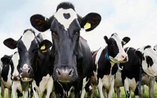 Erzurum hayvancılıkta rekora koşuyor!