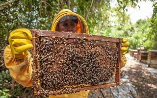 Erzurum'da 286 bin arı kolonisi var