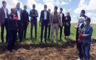 Erzurum'da lavanta turizmi vakti