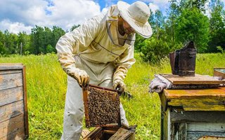 Erzurum'da 141 bin 764 arı kolonisi var!