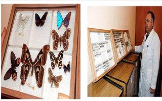 Türkiye'nin en büyük böcek müzesi Erzurum'da