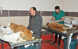 Erzurum'da hayvanlara 5 yıldızlı sağlık hizmeti