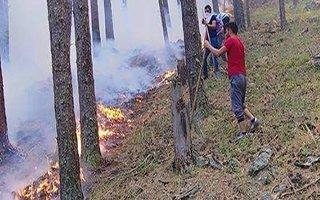 Oltu'da orman yangınlarında sabotaj şüphesi