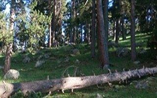 9 ayda 147 orman düşmanına işlem yapıldı!