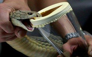 Erzurum'da yüzlerce tüp kobra yılanı zehri ele geçirildi