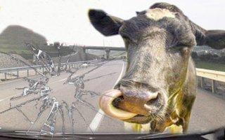 Otomobil ineğe inek vatandaşa çarptı