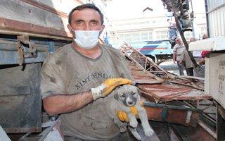 Sıkışan köpekler Vinç yardımıyla kurtarıldı