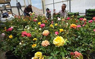 60 bin çiçek ve 5 bin gül toprakla buluştu