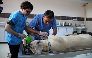 Hasta hayvanlar kendi hastanesinde şifa buluyor