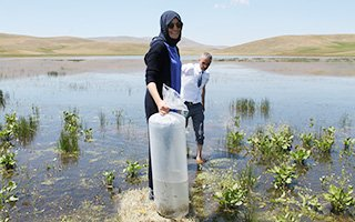 67 bin adet sazan balığı göletlere bırakıldı