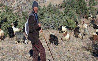 Keçilerinin Kahraman Çobanı