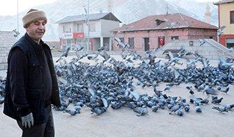 Yemsiz kalan güvercinleri esnaf doyuruyor