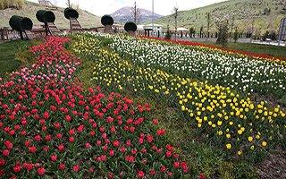 Büyükşehir, 650 bin lale, 900 bin çiçek dikti...