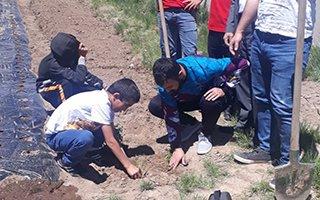 Koruma altındaki çocuklardan çilek tarlası projesi