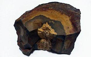 Erzurum'da fosil ağaç ormanı keşfedildi!