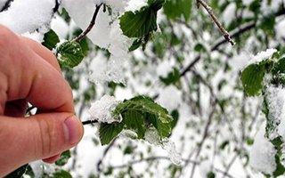 Meteoroloji'den Erzurum için 'zirai don' uyarısı