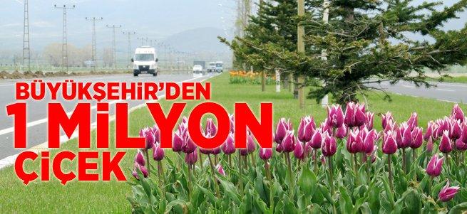 Büyükşehir 1 Milyon Çiçek Dikiyor
