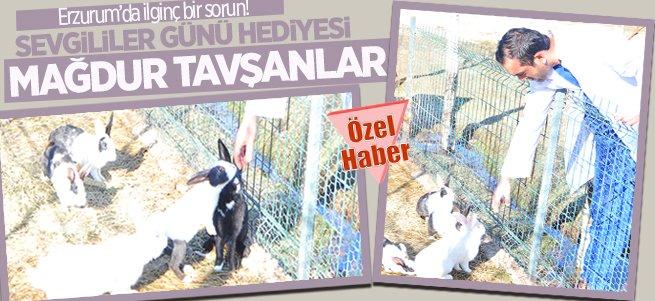 Erzurum'da sevgililer günü mağduru tavşanlar!