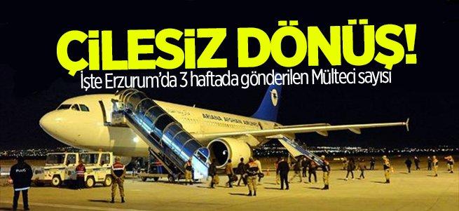Erzurum'dan 3 haftada 1550 mülteci gönderildi
