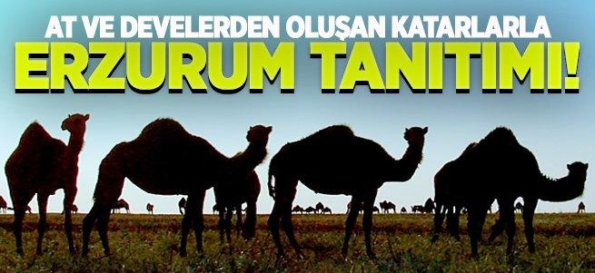 At ve develerle Erzurum tanıtılacak!