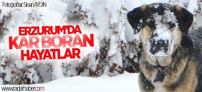Erzurum'da kar yağışı yaşamı zorlaştırıyor