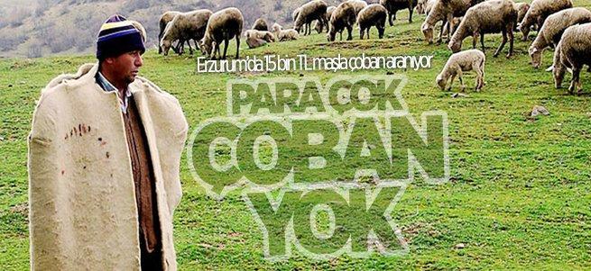 Erzurum'da para çok çoban yok