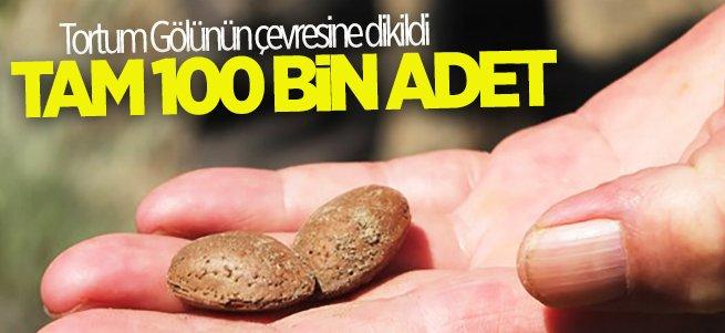 Tortum gölü çevresine 100 bin badem tohumu dikildi