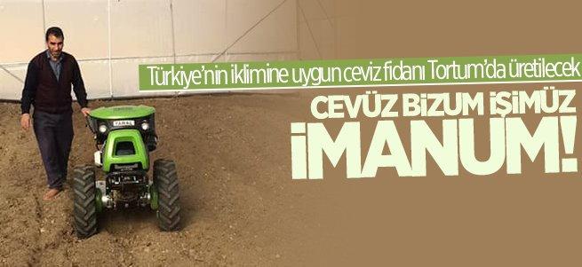 Türkiye'nin ceviz fidanı Tortum'da üretilecek