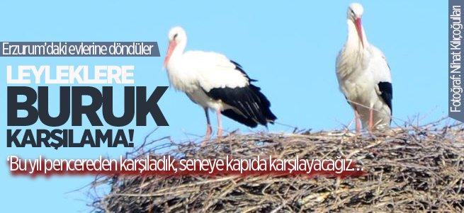 Leyleklere Erzurum'da Pencereden Karşılama!