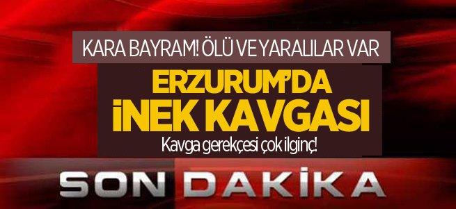Erzurum'da inek kavgası! Ölü ve yaralılar var...