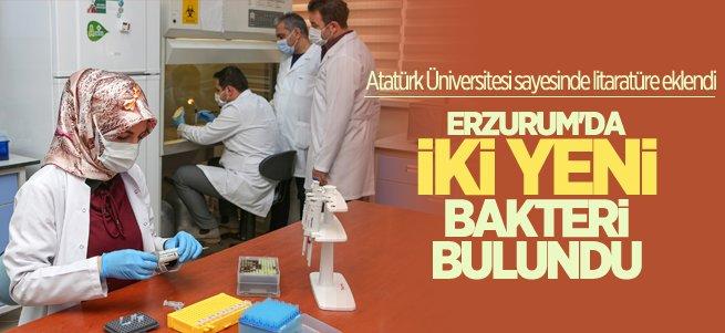 Erzurum'da yeni bakteri cinsi ve türü keşfedildi