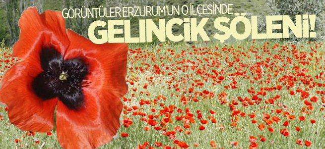 Erzurum'da gelincik şöleni