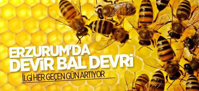 Erzurum'da arı yetiştiriciliğine ilgi artıyor