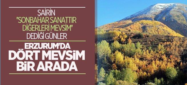 Erzurum'da rengarenk sonbahar